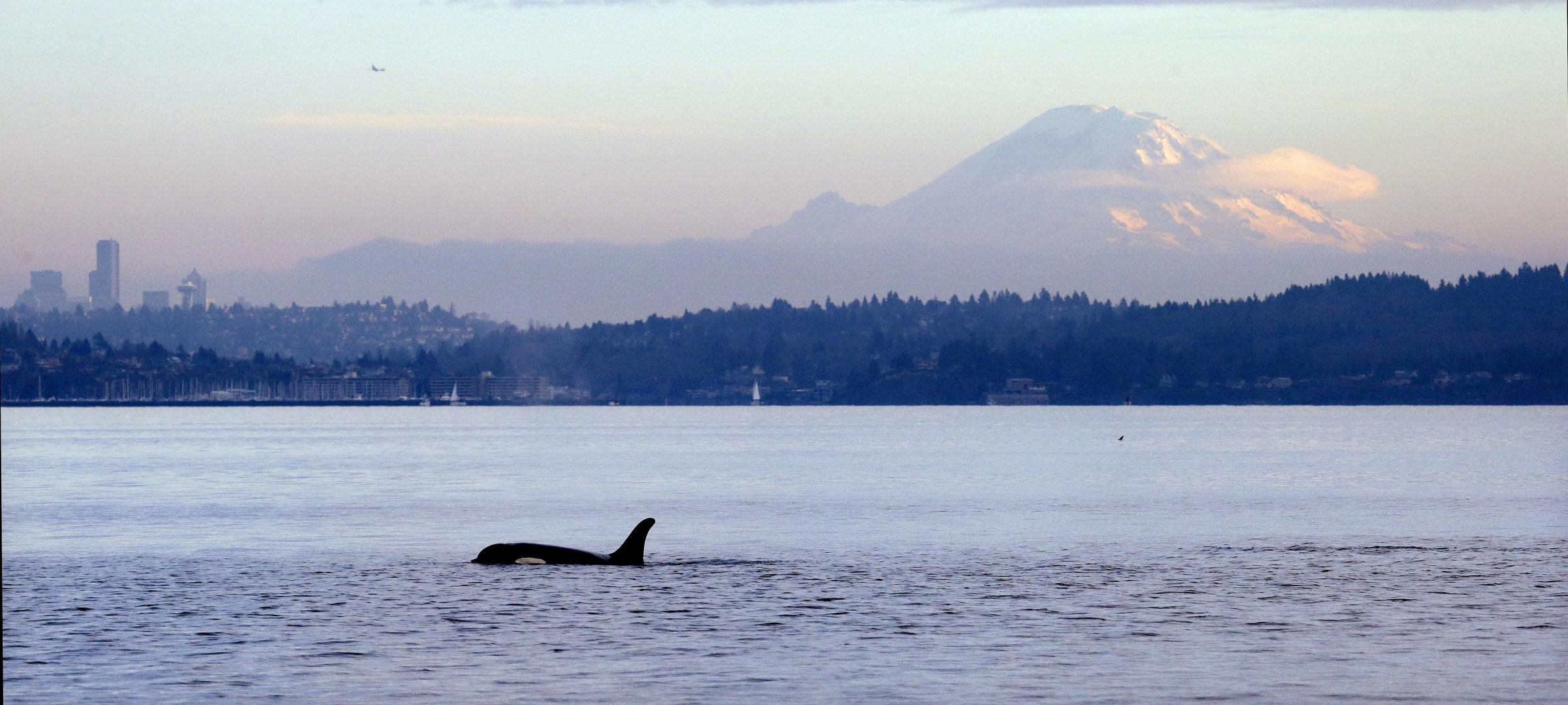 How FishViews is Helping With Puget Sound Conservation